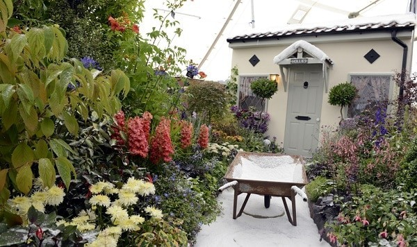 Photo of ?Snow in summer? by Monkton Elm wins top awards at Taunton Flower Show