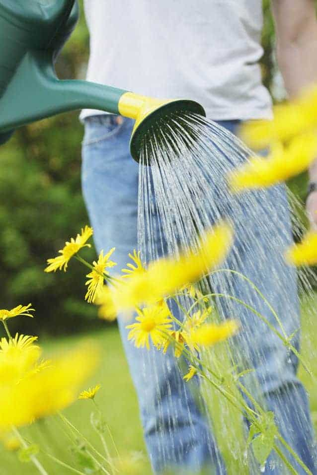 Photo of Green-fingered Britain puts more energy into gardening than playing sports