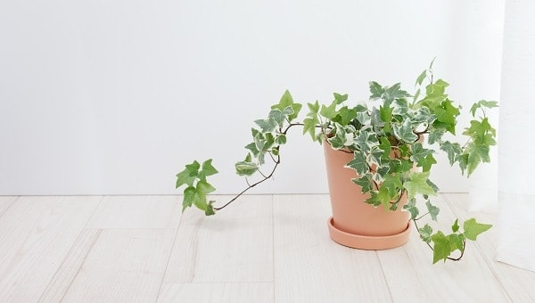 Photo of Why houseplants are good for our health