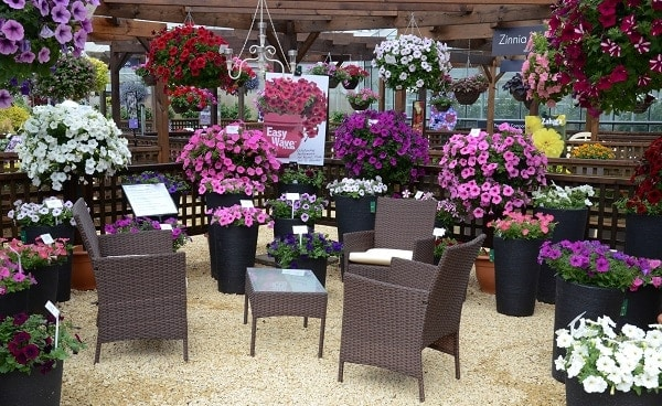 Photo of Stewart Garden top planter supplier at Ball Colegrave Summer Showcase