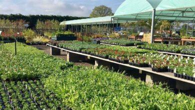 Holly Farm