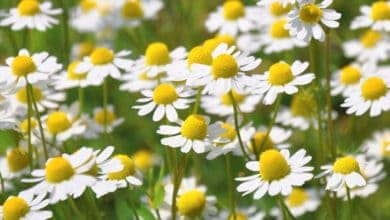Photo of Top 5 plants for boosting mood by RHS Show Garden designer