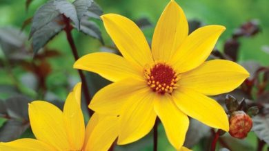 Photo of VIDEO: Top 9 drought-tolerant plants