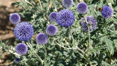 Photo of VIDEO: Top 9 plants for coastal gardens