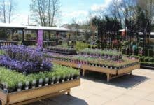 Photo of Hot weather helps sales bloom for garden centres in May