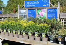 Photo of Plant pot fully recyclable introduced to the UK through Hillier Nurseries