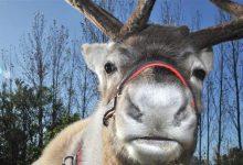 Photo of Hearts Delight Garden Centre defends reindeer farm in Kent