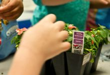 Photo of 40% of parents aren?t confident planting plants with their children