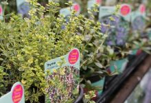 Photo of Plants lead strong July garden centre performance