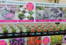 Photo of Small plants range from Farplants sees record growth
