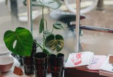 Photo of Top 10 indoor plants selling out due to millennial demand