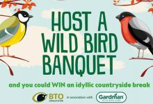 Photo of Wild Bird Banquet campaign drives traffic to garden centres