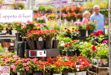 Photo of Belgium reopens garden centres as restrictions ease