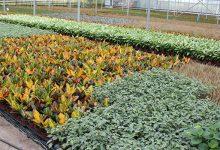 Photo of Opperman Plants secures £250,000 loan from MEIF Maven Debt Finance