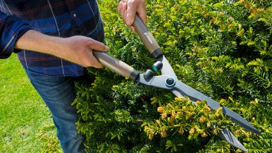 Photo of GARDENA hedge cutters a cut above the rest