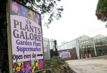 Photo of Plants Galore owner rips up closure order