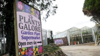 Photo of Plants Galore becomes first to shut down for ignoring coronavirus rules