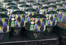 Photo of SmartPlant plant app partners with Dobbies Garden Centres