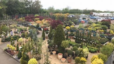 Photo of Welland Vale Garden Inspirations sets up coronavirus plans