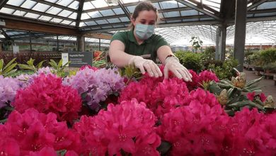 Photo of Dobbies Garden Centres are in the pink
