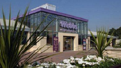 Photo of Webbs Garden Centre in Wychbold launches drive-in cinema
