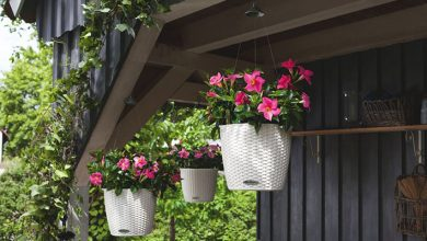 Photo of Seasonal assortment: we manage the assortment of a garden centre in the summer, using the LECHUZA planter as an example