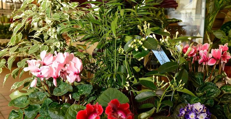 Photo of Houseplant sales soar in July