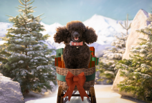 Photo of Dobbies unveils Christmas advertising campaign for 2020