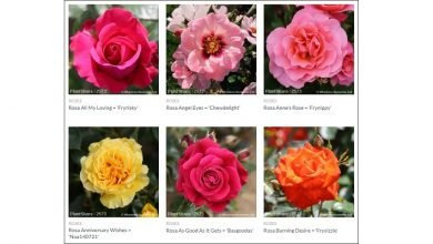 Photo of Whartons Nurseries partners with Joy of Plants for webshop image library