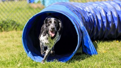 Photo of Doggy day care opens at flagship Dobbies location