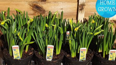 Photo of Dire St David's Day predictions for horticulture in Wales