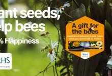 Photo of Fiskars teams up with the RHS to support the nation's bees