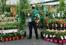 Photo of Dobbies reopens Swansea store under new Welsh guidelines