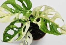 Photo of Study reveals the most expensive houseplants sold