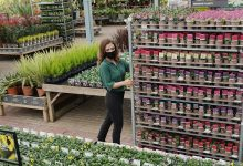 Photo of Dobbies acquires Johnsons Garden Centre