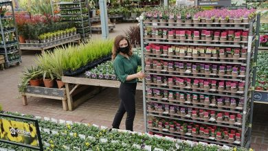 Photo of Dobbies acquires Johnsons Garden Centre
