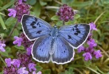 Photo of Dobbies partners with Butterfly Conservation