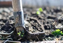 Photo of What equipment do new garden maintenance businesses need?
