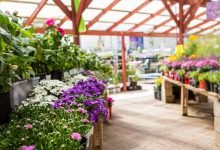 Photo of Garden centres reminded to ensure they are registered for business rates relief