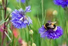 Photo of Dobbies hosts World Bee Day virtual event with Neal's Yard Remedies