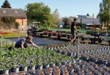 Photo of Pershore garden centre and nursery sees record sales