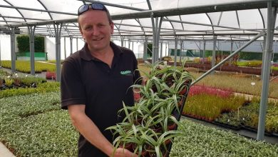 Photo of Seiont Nurseries partners with Joy of Plants to promote new plants
