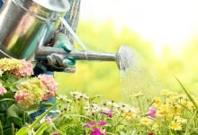 Photo of Garden care categories boom with Evergreen Garden Care leading the charge
