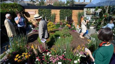 Photo of Dobbies secures five stars at RHS Chelsea Flower Show