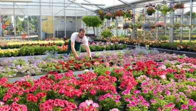 Photo of HTA's grower committee calls for action on labour shortages and post-Brexit trade controls